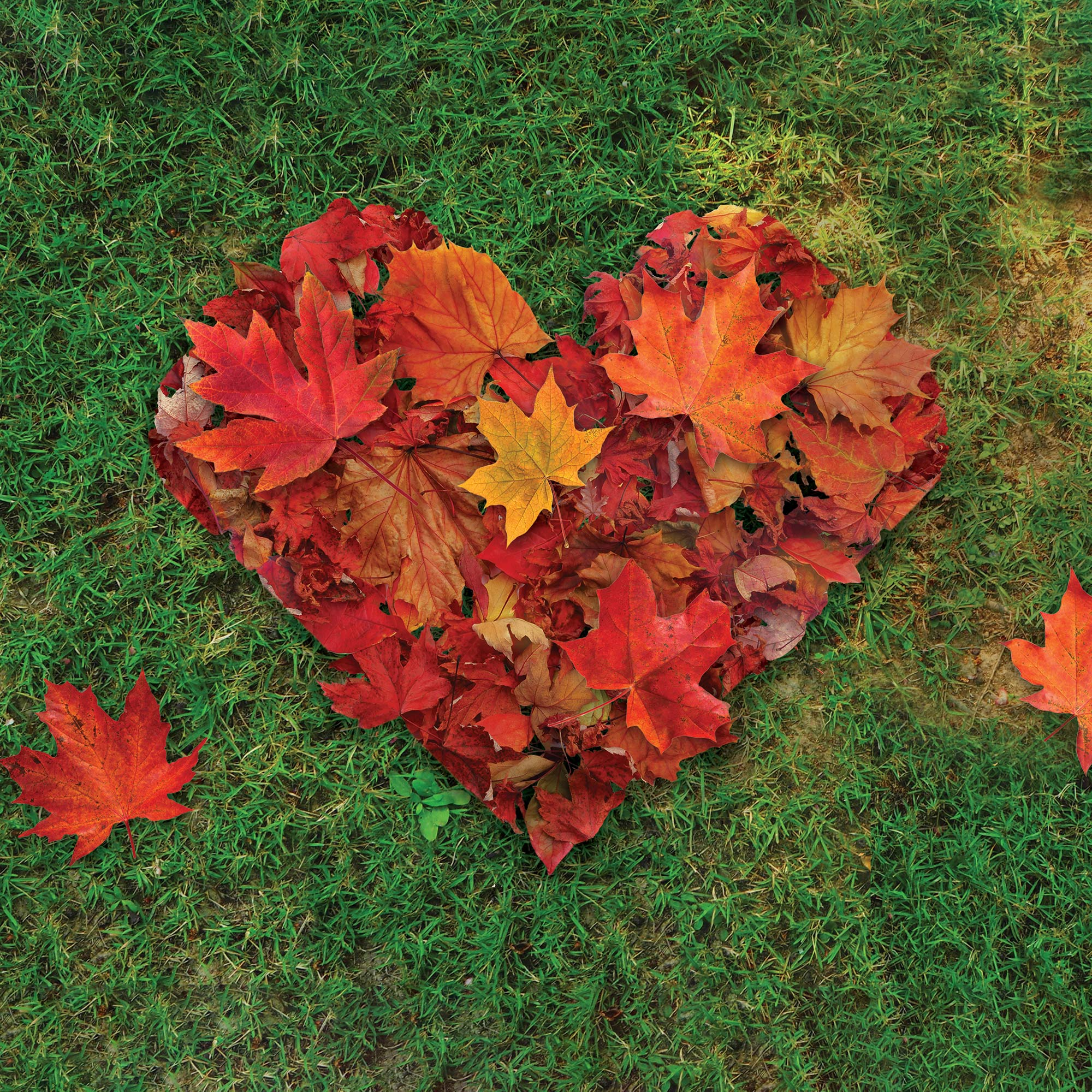 A stylized CVS Health® heart in the shape of red leaves on a green grass background.