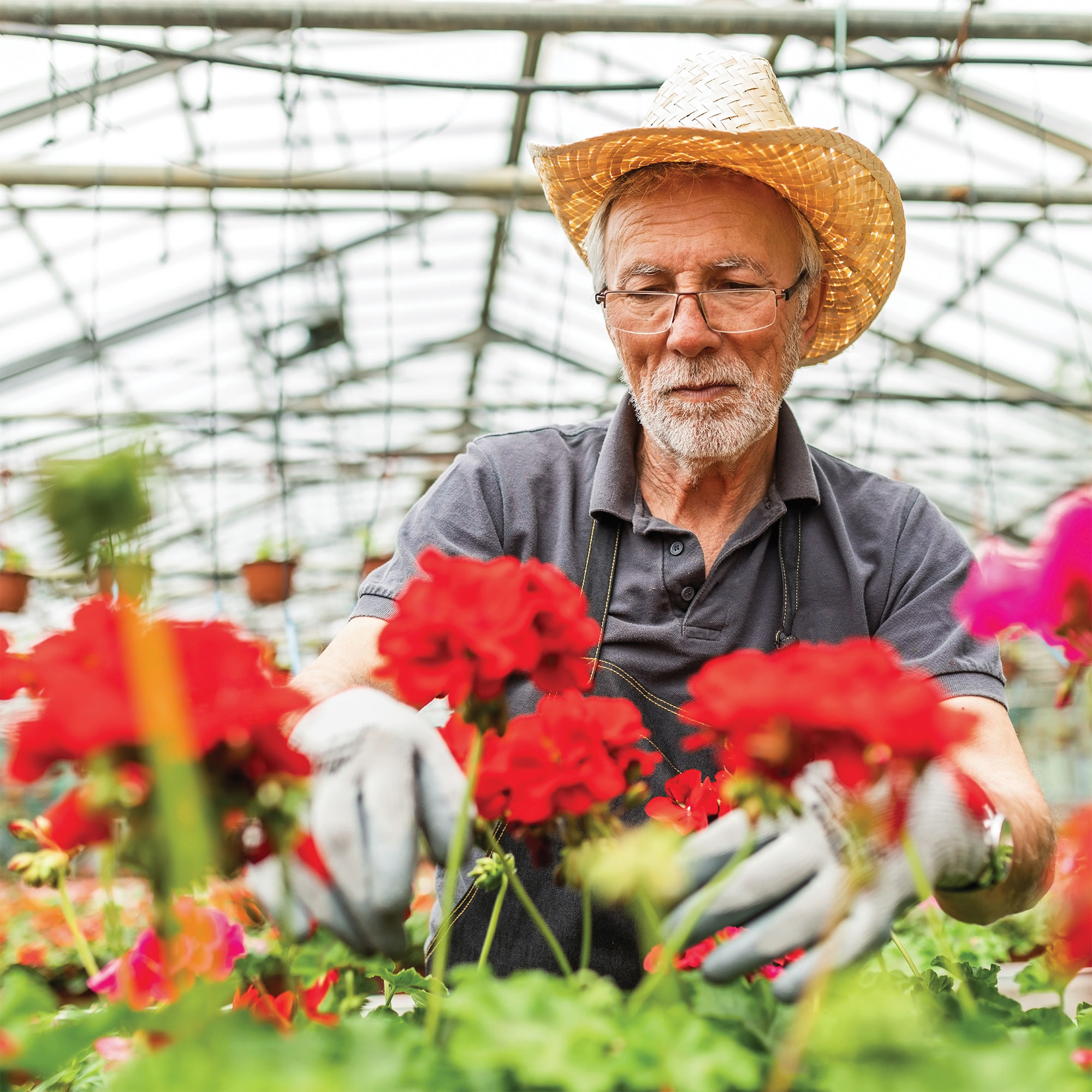 A gentleman in a straw hat tends to red carnations