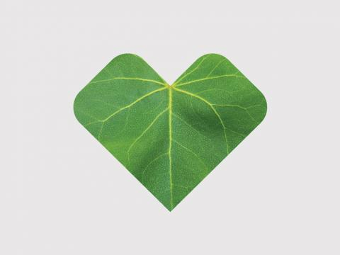 A heart-shaped leaf.
